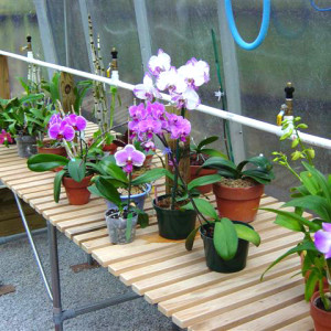 misting system for greenhouses
